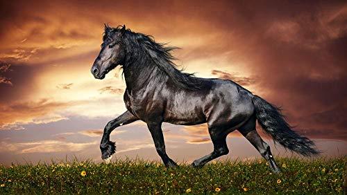 Digitaal schilderwerk, knutselen, paard in zonsondergang, geschenken, decoratie voor woonkamer, creatief, casual, handbeschilderd, zonder lijst, 40 x 50 cm