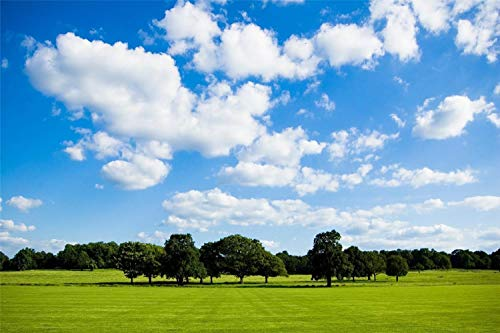 Descompresión Para Adultos 1000 Piezas Peaceful Meadow Montaje De Madera Decoración Para El Hogar Juego De Juguetes Juguete Educativo Para Niños Y Adultos