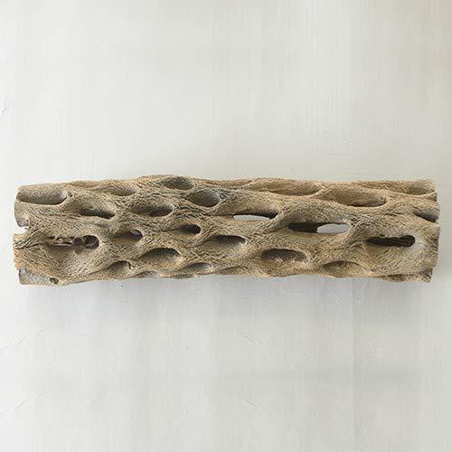 古きを知る サボテンの骨 LL(長さ20~25cm)