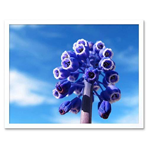 Grape Hyacinth Muscari Blue Flower Macro...