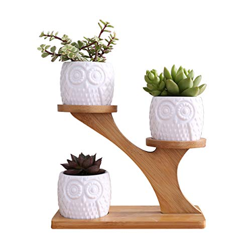 Ceramic Planters with Wooden Stand