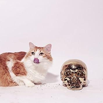 Cat Scratched Mind