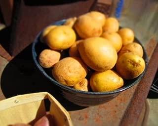 Simply Seed - 15 Piece Potato Seed - Organic Grown - German Butterballs - Non GMO - Fall Planting