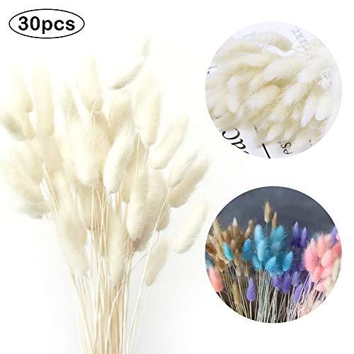 Getrocknete Pampasgras Deko, 35X Pampasgras Getrocknet, Kein Geruch Trockenblumen, Trockenblumenstrauß, Natürliche Getrocknete Blumendekoration(Weiß)
