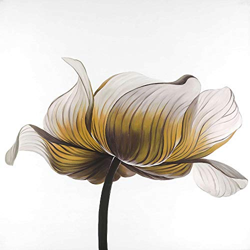 Discover Bargain BEGIN DECO MAISON - HOME DECOR 2080-3636-FL194-2 Yellow Anemone Flower, Fine Art Ga...