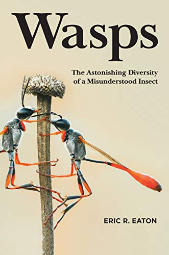Wasps: The Astonishing Diversity of a Misunderstood Insect