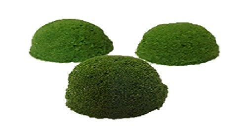 仁丹藻 [ミジンコウキグサ] メダカのエサ 金魚のエサ 浮き草 100g