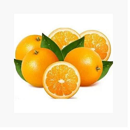 Aerlan Pflanzen für Balkon und Terrasse,Citrus Red Orange Citrus Navel Orangensamen Orangenbaumsamen-250g Grapefruit,samen für Hausgarten,Balkon,Terrasse