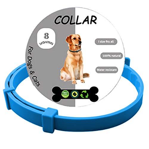 LYYHUA Collare antipulci e zecche per cani, protezione da 8 mesi, impermeabile, naturale, per animali di piccola taglia e media e grande