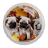 Tirador de manijas de cajón para el hogar, cocina, tocador, armario-Tres perritos