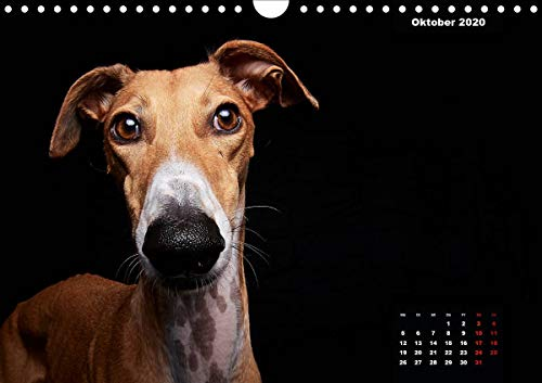 『Gier, M: Stimme der Windhunde (Wandkalender 2020 DIN A4 quer』の11枚目の画像