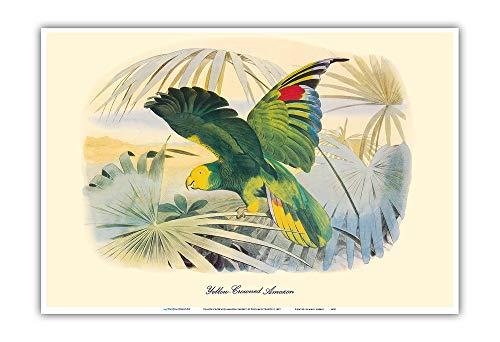 Pacifica Island Art Giallo-incoronato Amazon Parrot (Amazona ochrocephala)-Vintage Uccello Illustrazione di douard Travis c.1857-Stampa Master arte-13x19 Pollici