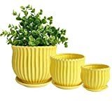 Nattol Yellow Ceramic Flower Pots with Saucers, Modern Round Ceramic Succulent Plant Pots with Stripe Texture, Small to Medium Sized, Set of 3