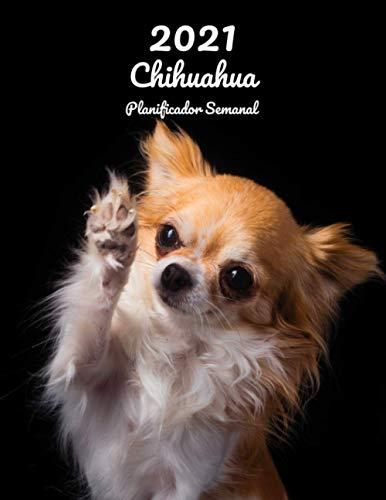 2021 Chihuahua Planificador Semanal: 123 Páginas   Tamaño A4   Calendario   14 Meses   1 Semana en 2 Páginas   Agenda Semana Vista   En español   Perro