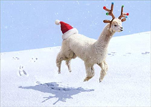 Alpaca Reindeer Avanti Funny/Humorous Christmas Card