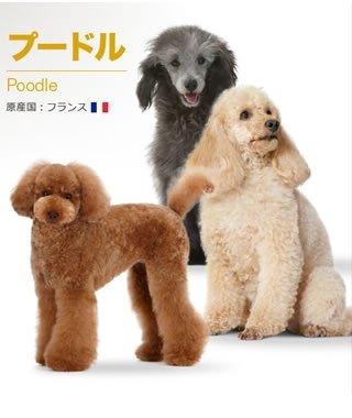 ロイヤルカナンBHNプードル子犬用1.5kg