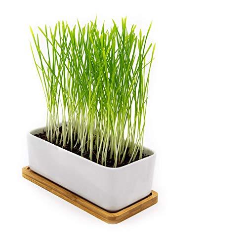 Pfotenolymp® Tazón de Hierba de Gato de Primera Calidad/Juego de Semillas de Hierba de Gato - tazón de cerámica de Hierba de Gato - Juego de plantación Listo con Semillas, Tierra, Maceta y Hierba