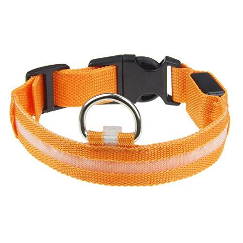 Hondenhalsband, LED, oranje, elektrisch, voor honden en huisdieren, nylon, halsband, veiligheidslijn voor kleine honden, alle seizoenen, zacht gevoerd, ademend, M
