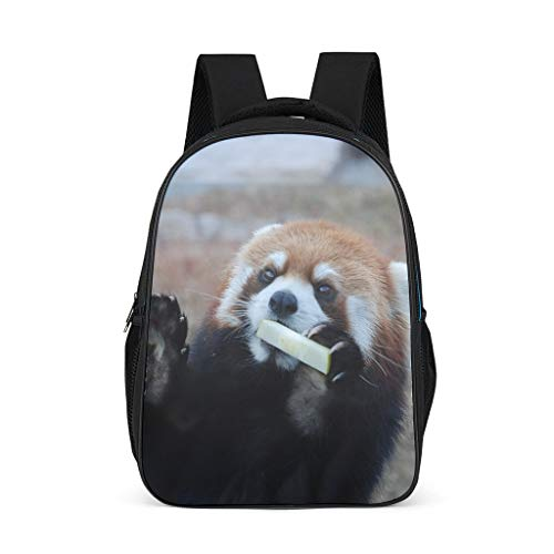 Red Panda Eat Lightweight Backpack for Teens Adults School Bags for Boys and Girls Gifts for Kids Book Bag Bright Gray OneSize