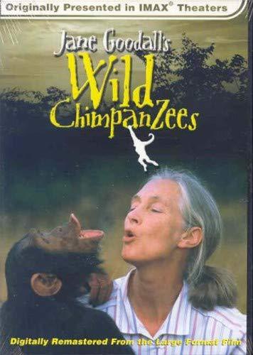 Jane Goodall's Wild Chimpanzees (Large Format)