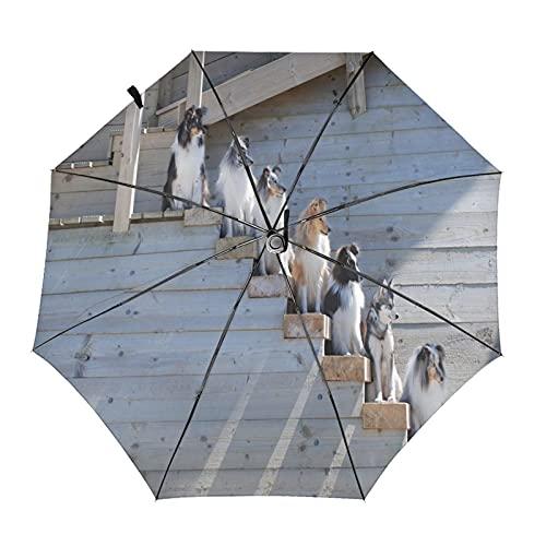 Pastor perro en escaleras paraguas plegable portátil compacto ligero diseño automático y alta resistencia al viento