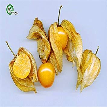 VISTARIC Noir: graines de citron à l'importation, délicieux graines de fruits de chaux, 100% vraiment graines Citrus limon, 50 particules/sac