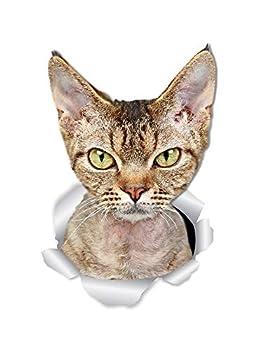 Winston & Bear Grumpy Rex Cat Wall Decals - 2 Pack - Grumpy Rex Cat Toilet Sticker – 3D Cat Car Window and Bumper Sticker - Retail Packaged Cat Lover Gifts