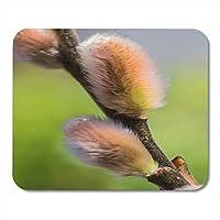 マウスパッドネコヤナギネコネコの尾状花序古典的な北欧諸国の春の始まりこの花はノートブック、デスクトップコンピュータ、オフィス用品のお気に入りのマウスパッドです