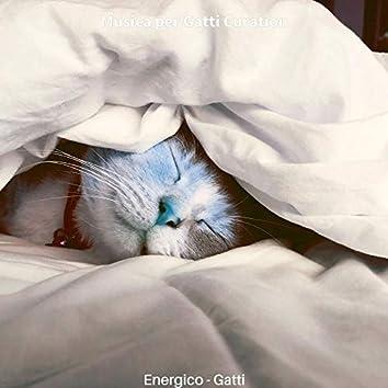 Energico - Gatti