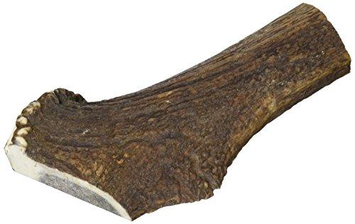 Arquivet Asta de ciervo para perros - 100% naturales - Mordedor para perros - Astas de ciervo hipoalérgicas - Juguete mordedor para canes - Masticador perros - XL (121-170 g)
