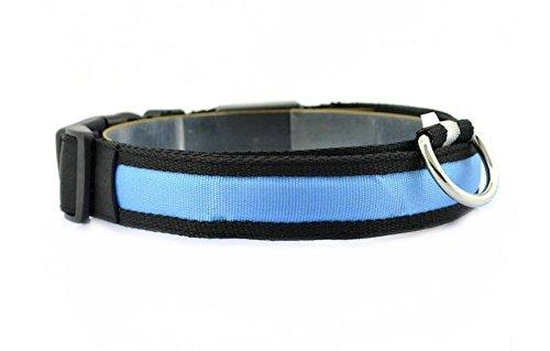 Da.Wa Leuchthalsband S/M/L/XL Halsband LED Hundehalsband Sicherheitshalsband Nylon