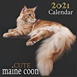 Cute maine coon: 2021 Wall & Office Calendar, 12 Month Calendar