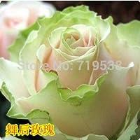 ダンスの後新しいバラの鉢植えのバラ/フラワーローズ100フラワーシード