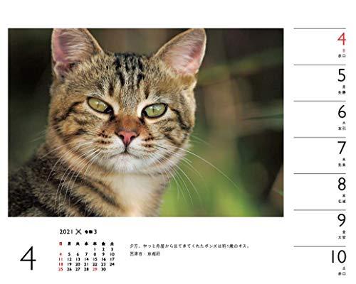カレンダー2021岩合光昭×ねこ(週めくり・卓上/壁掛け・リング)(ヤマケイカレンダー2021)