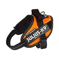 Julius-K9, 16IDC-FOR-MM, IDC Powerharness, dog harness, Size: Mini-Mini, UV Orange