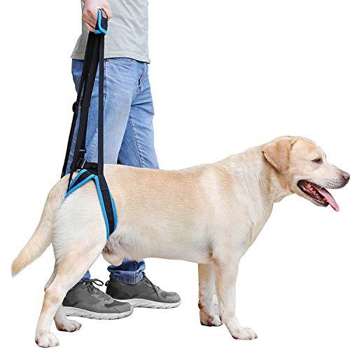 Daihuaer Hundestütze Haustier Beinstütze Treppe Rückenstütze Heckhub Hilfsgurt Rehabilitationsübung Der Hinteren Extremitäten Verstellbarer Gurt,M