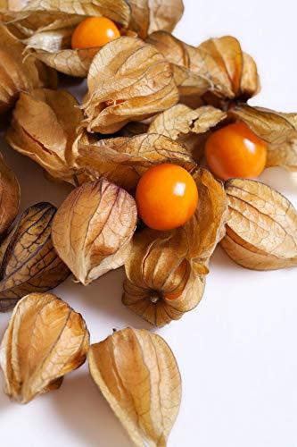 40 Samen Physalis Andenbeere (Kapstachelbeere;Physalis peruviana; exotische Blasenkirsche, frische gesunde Kerne zur Aussat, exotisches Obst), kostenloser Versand aus Deutschland