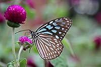 キッズジグソーパズル300ピース 蝶の紫色の花は動物をクローズアップ パズル大人と子供のための創造的な贈り物家族の楽しいゲーム