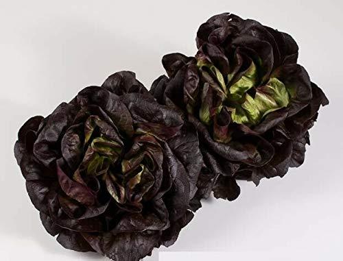 SANHOC Samen-Paket: Salanova® Gaugin Multileif Salat 15 Samen Holland Salan Multilif Gauguin