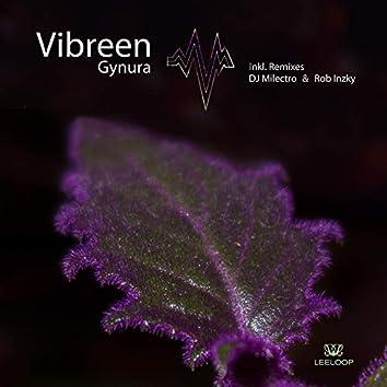 Gynura