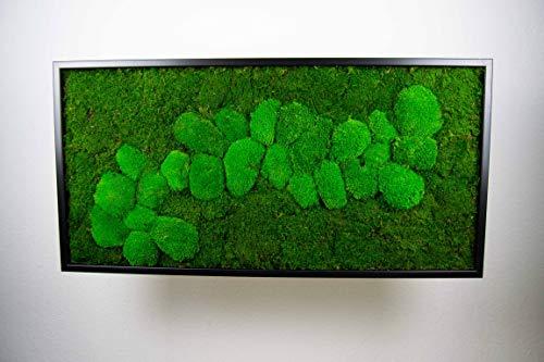 Moosbild Wandbild mit Moos Kugelmoos Moosplatte Pflanzenbilder Moosbilder versch. Maße günstig (110x55 cm, schwarz)