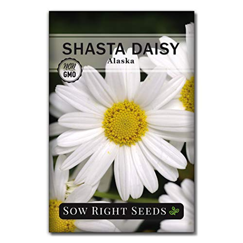 Sow Right Seeds - Shasta Daisy Flower Seeds for Planting, Beautiful Flowers to Plant in Your Garden; Non-GMO Heirloom Seeds; Wonderful Gardening Gifts (1)