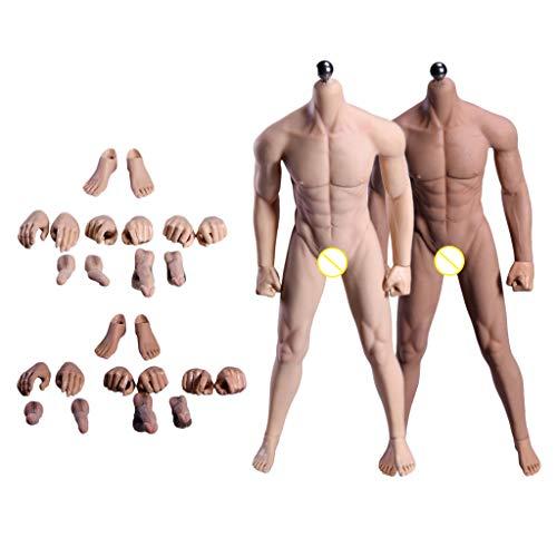 T TOOYFUL Muskulöser Männlicher Nahtloser Körper Im 1/6 Maßstab Edelstahlfigur Normal & Weizen