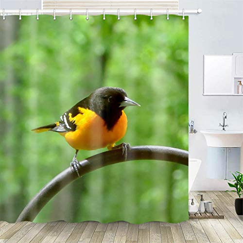 Shower Curtain, Polyester Fabric Waterproof Hooks Included-72x72 inches- Bird Avian Baltimore Oriole Oriole Nature Wildlife
