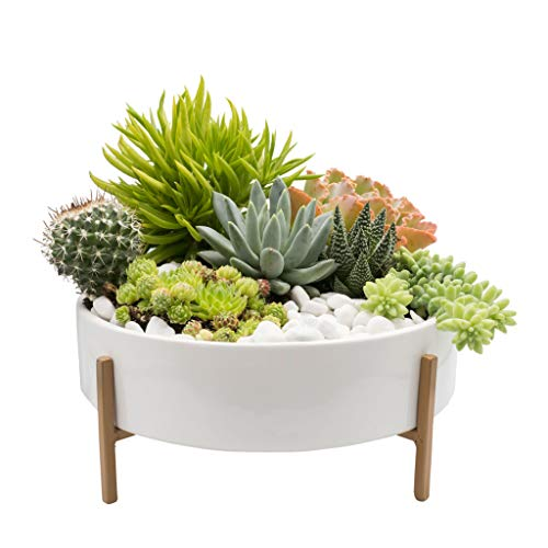 Joda 10 Inch Mid Century Succulent Planter Bowl with Stand, White Ceramic Pot with Stand, Succulent...
