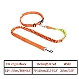 LJTJX Pet Elastic Band Laufende Hundeleine Set Hundeleine Halsband Haustier accesorios, OG M