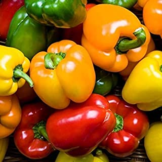 Rainbow Blend Sweet Bell Pepper Seeds, 50+ Premium Heirloom Seeds,So Much Fun!! A Must Have for Your Home Garden! (Isla's Garden Seeds), Non GMO, 85-90% Germination Rates, Seeds
