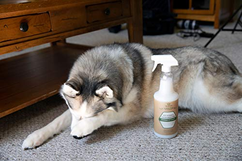 Using cleaner for dog urine on carpet