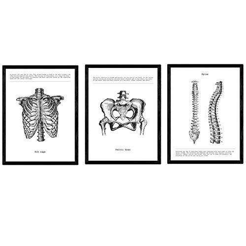 Nacnic Set de 3 Posters de anatomía en Blanco y Negro con imágenes del Cuerpo Humano. Pack de láminas sobre biología con Costillas, Pelvis y Columna Vertebral. Tamaño A4. con Marco.
