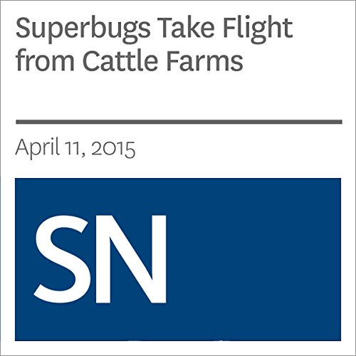 Superbugs Take Flight from Cattle Farms cover art